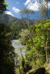 Orongorongo River from Big Bend Track. Rimutaka Forest Park